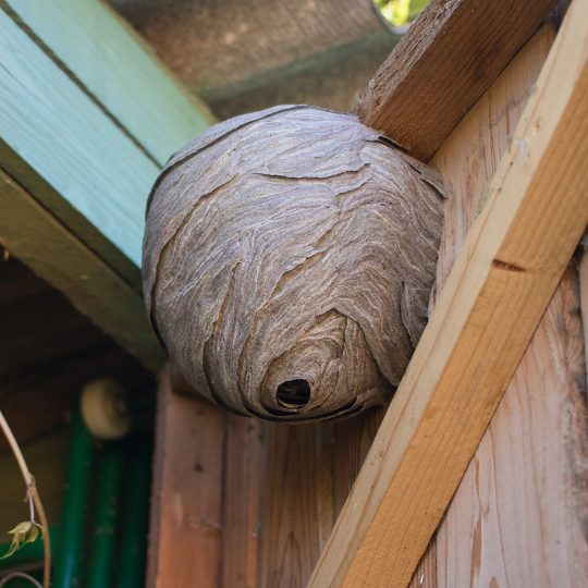 Why You Need Professional Stinging Insect Control for Wasps