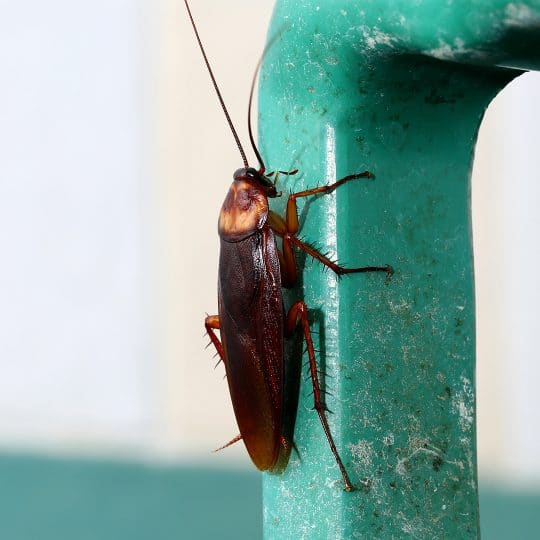 5 Signs of Cockroaches