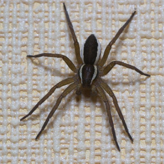 Keep Spiders Out of Your House This Spring