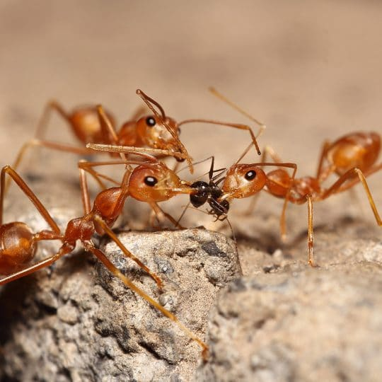 3 Reasons Ants Invade Your Home