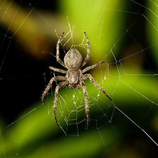 Does a Spider Invasion Require Professional Help?