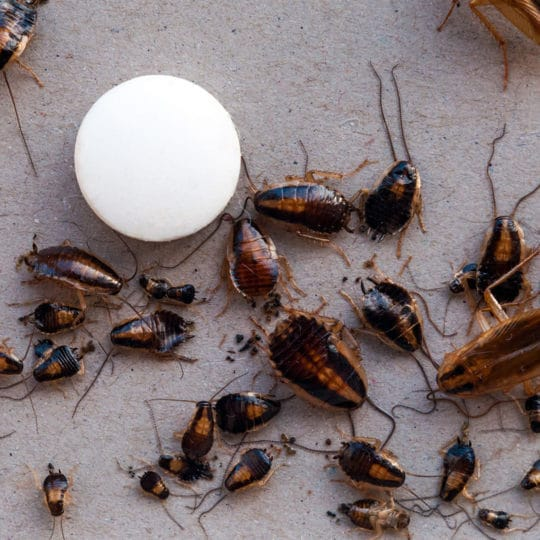 Why Homes in Gainesville Should Choose Ongoing Pest Control
