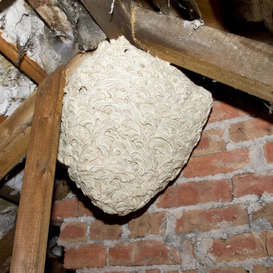 DIY Wasp Nest Removal: Five Things to Consider