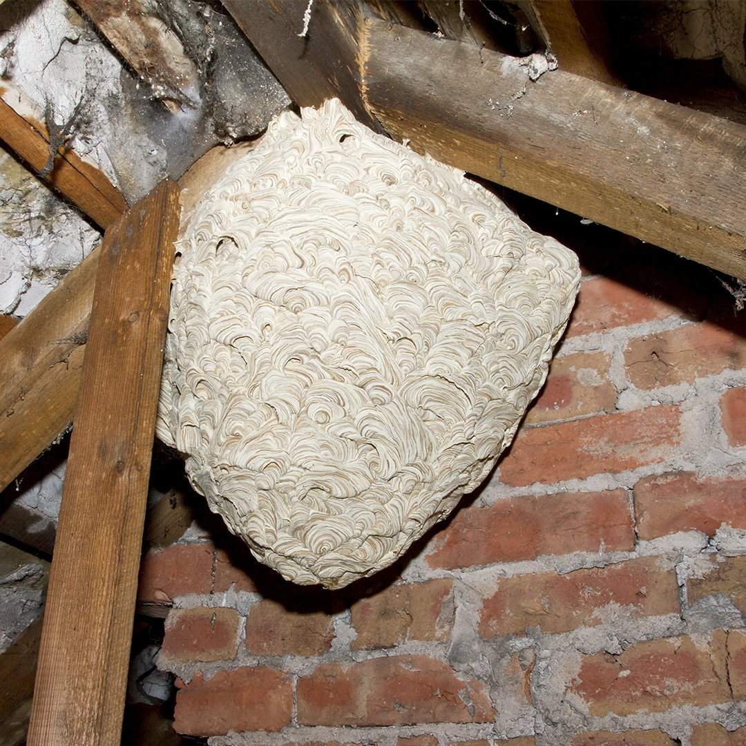DIY Wasp Nest Removal: Five Things To Consider · ExtermPRO