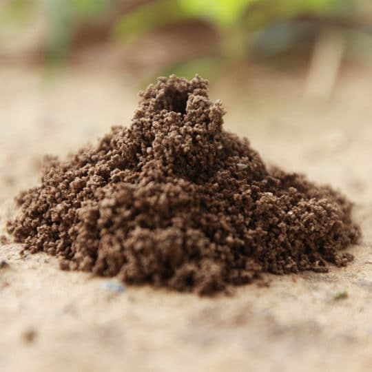 How Are Ant Hills Organized?