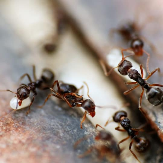 Why Are Ants in My Garage?