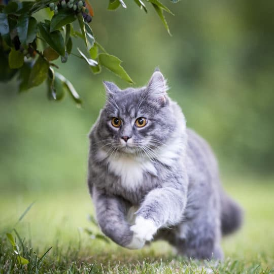 Can Cats Get Lyme Disease?