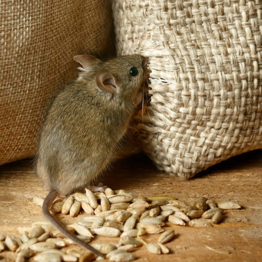 how to keep mice from coming inside