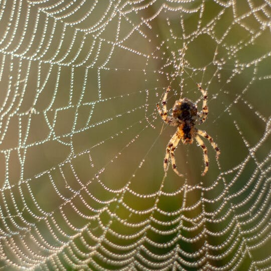 Spiders in Virginia: Which Types You'll Find