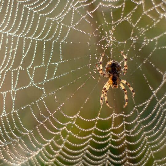 spiders found in Virginia