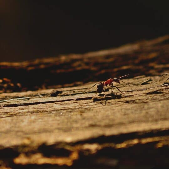 What Attracts Ants to Homes in Gainesville