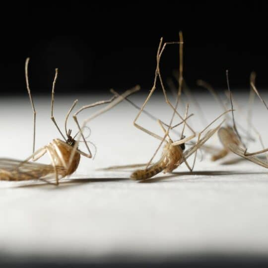 How to Tell If You Need Professional Mosquito Control
