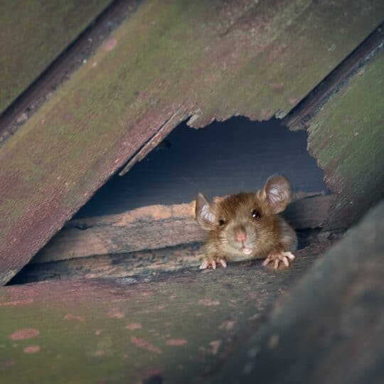 Buying a Home? Here's How to Avoid Choosing a Home with Pest Problems
